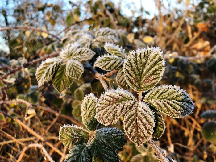 EyeEm Selects Focus On Foreground Plant Close-up Growth Day Nature Beauty In Nature Pattern Green Color Frost Sunlight Flower No People Outdoors Fragility Flowering Plant Frozen Plant Part Vulnerability  Leaf