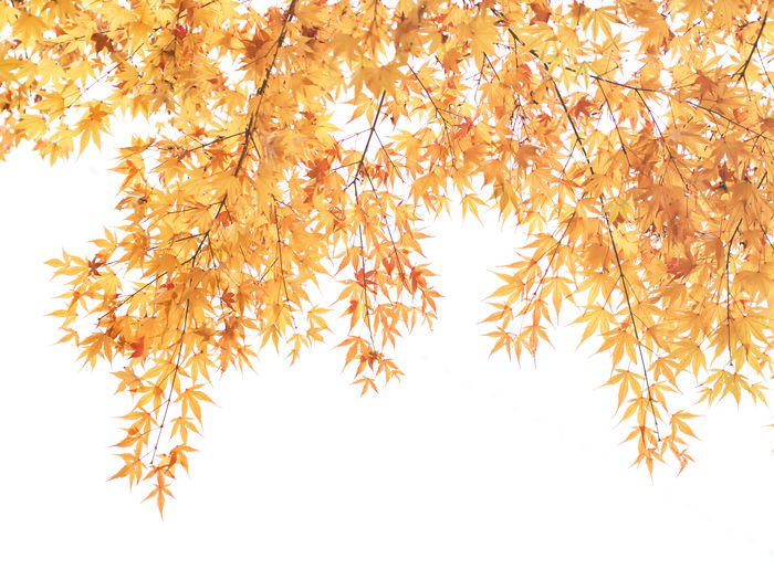 Low angle view of autumn leaves