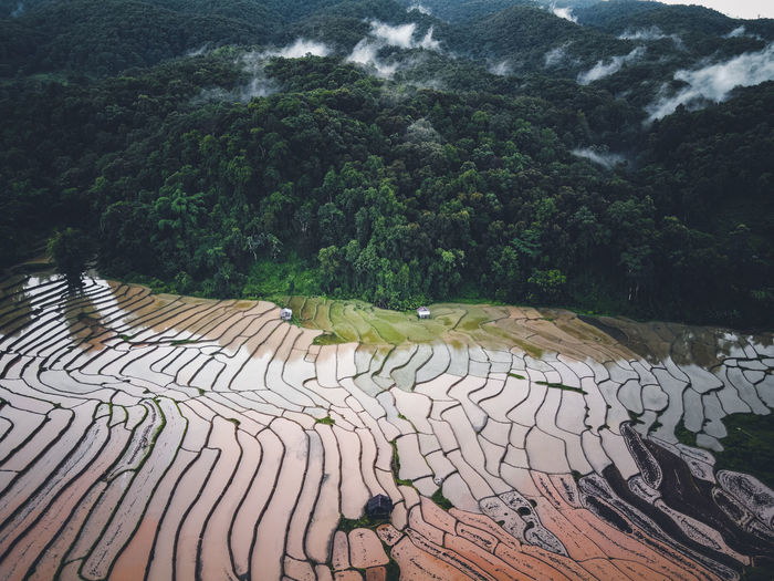 Aerial view of rice paddy
