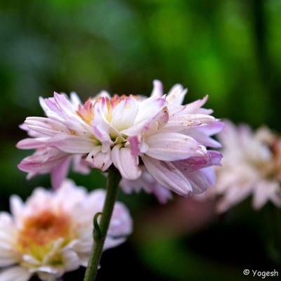 Good morning Flower Dailydose Nikon Happy