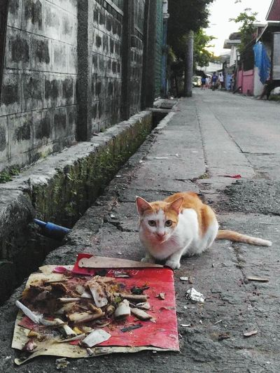 Check This Out Cat Hello World Streetphotography Stray Cat