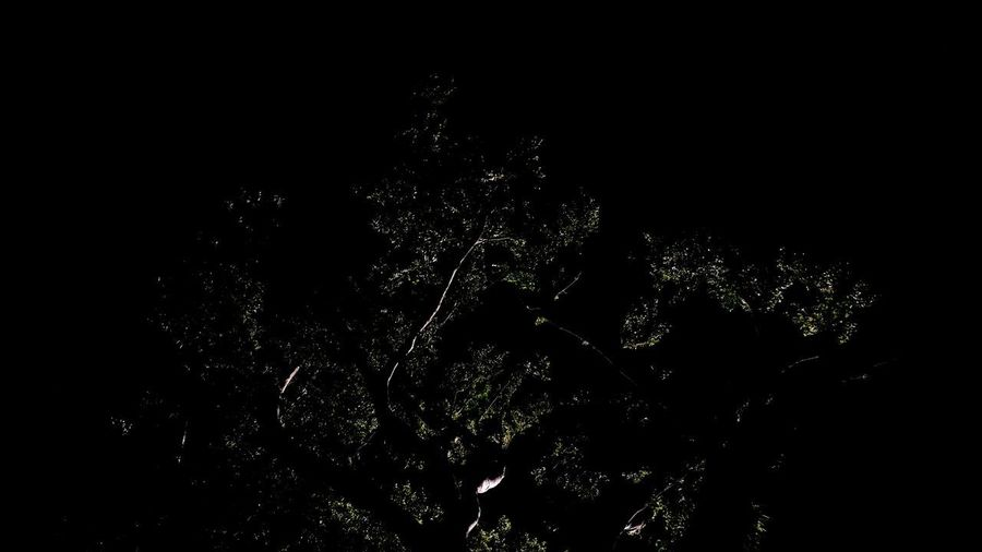 Tree Trees Dark Nightphotography Tree In The Dark Reflection Reflections Black Background Backgrounds Defocused Abstract Close-up