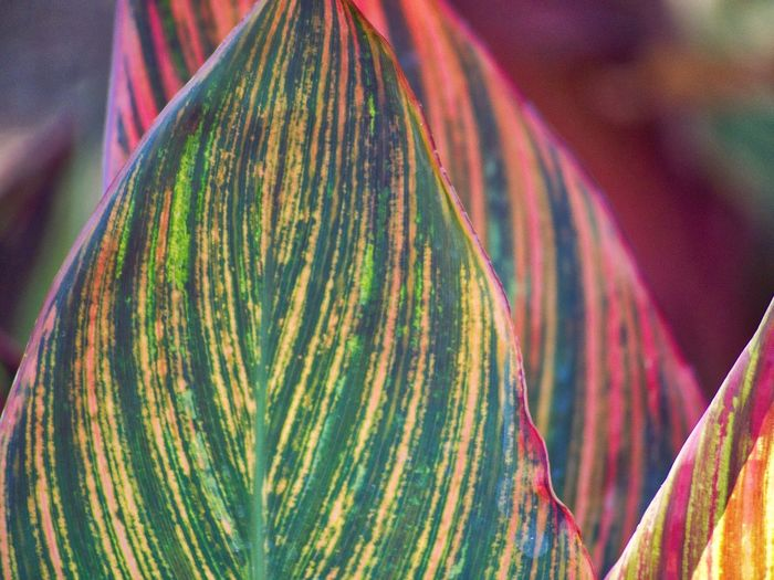 Close-up of multi colored leaf