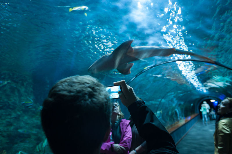 Close-up of boy photographing at aquarium