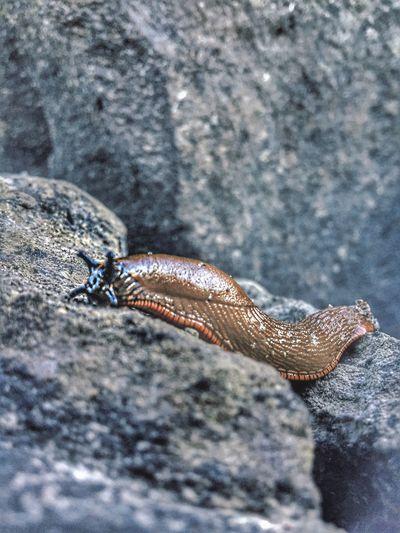 Slug Sluglife Sluggish Slugs Close-up Outdoors Nature Bridging The Gap Landscape Natural Condition Beauty In Nature Views Perspective Remote Solitude Tranquil Scene Stone Tranquility