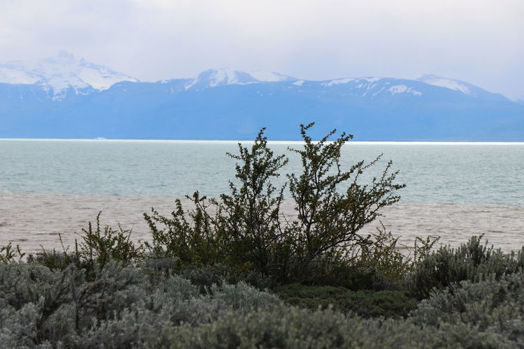 Calafate - Argentina Nature Nature Photography Arbuste Arbustos Beauty In Nature Calafate Cold Temperature Day Lagoon Montains    Mountain Nature Nature Photographer Nature_collection Naturephotography No People Outdoors Paisaje Natural Patagonia Patagonia Argentina Scenics Tranquil Scene Water