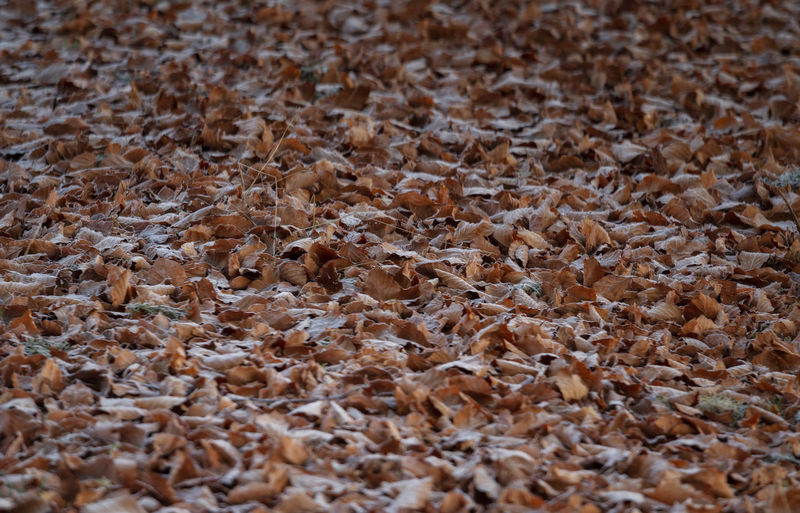 Full frame shot of dried leaves on land