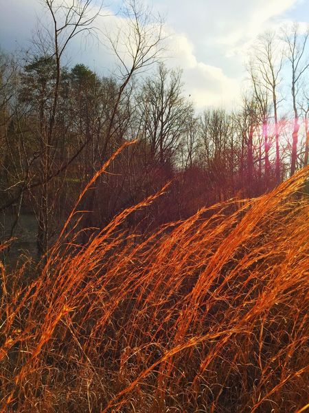 Hiding in the tall grasses by the water Rural Scenes Tennessee Sky Streamzoofamily IPhoneography Landscapes Nature Groundlevel Winter Earth