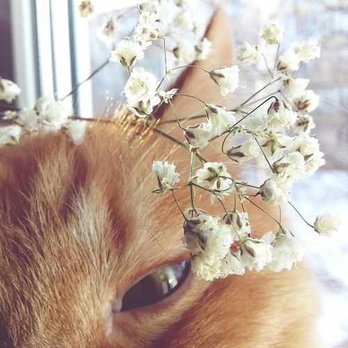 Cat Flower Photo Photostagram Pets Red-haired Red-haired Cat Vintage Fragility Close-up Day Indoors  No People Nature Tree Beauty In Nature Animal Themes Freshness First Eyeem Photo