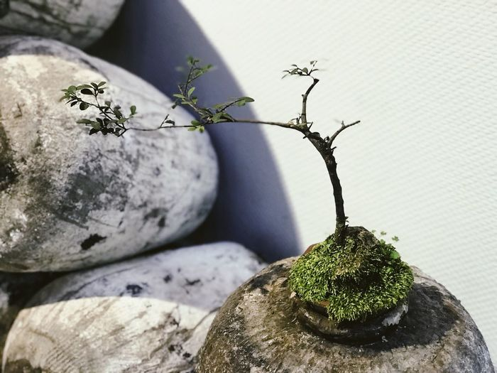 Still Life Light And Shadow Plant Growth Nature Close-up Potted Plant Green Color Beauty In Nature Rock