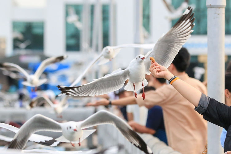 Cropped Hand Feeding Food To Seagull