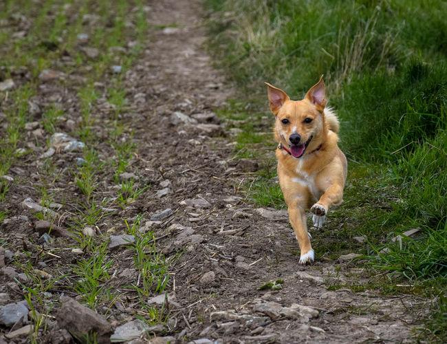 Portrait of dog in grass