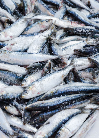 Close-up of fish in ice at market