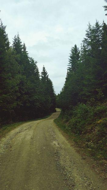 Road into deep forest Skaun Landscape_photography Road Forestwalk Forestroad Norway Eyemphotography Eyemnaturelover