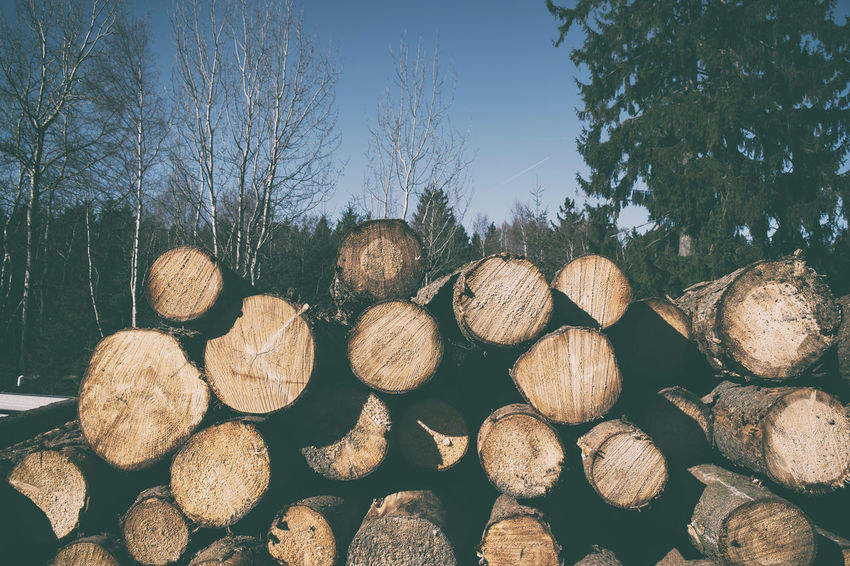 Woodpile Abundance Day Deforestation Environmental Issues Firewood Forest Fossil Fuel Fuel And Power Generation Heap Large Group Of Objects Log Lumber Industry Nature No People Outdoors Plant Stack Timber Tree Wood Wood - Material Woodpile