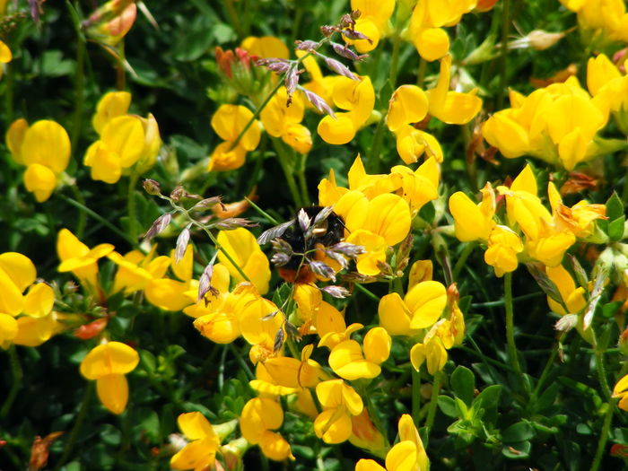 Close-up of insect on yellow flowers