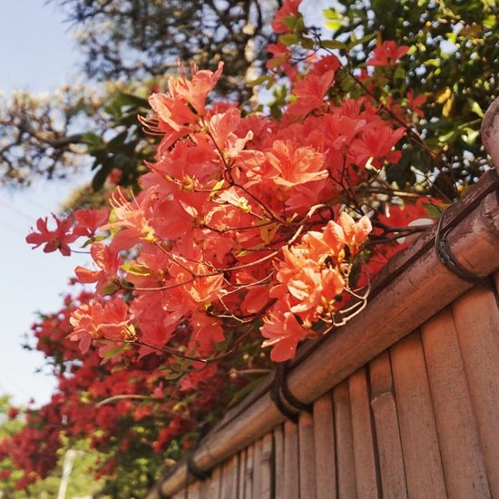 Azalea Flowers Wideangle Streetphotography Hanging Out