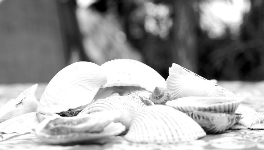 Seashell No People Outdoors Day Close-up Freshness Summertime Summer Views Check This Out Darryn Doyle Backgrounds Fragility Copy Space Nature Blackandwhitephotography The Week On EyeEm