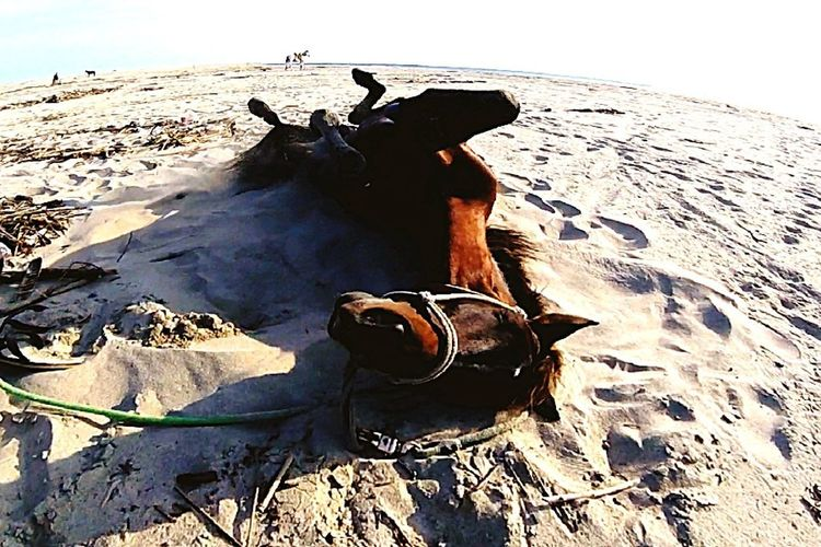 Sand Beach Heat - Temperature Day Nature Sky Water Mammal Horse <3 Horse Happiness