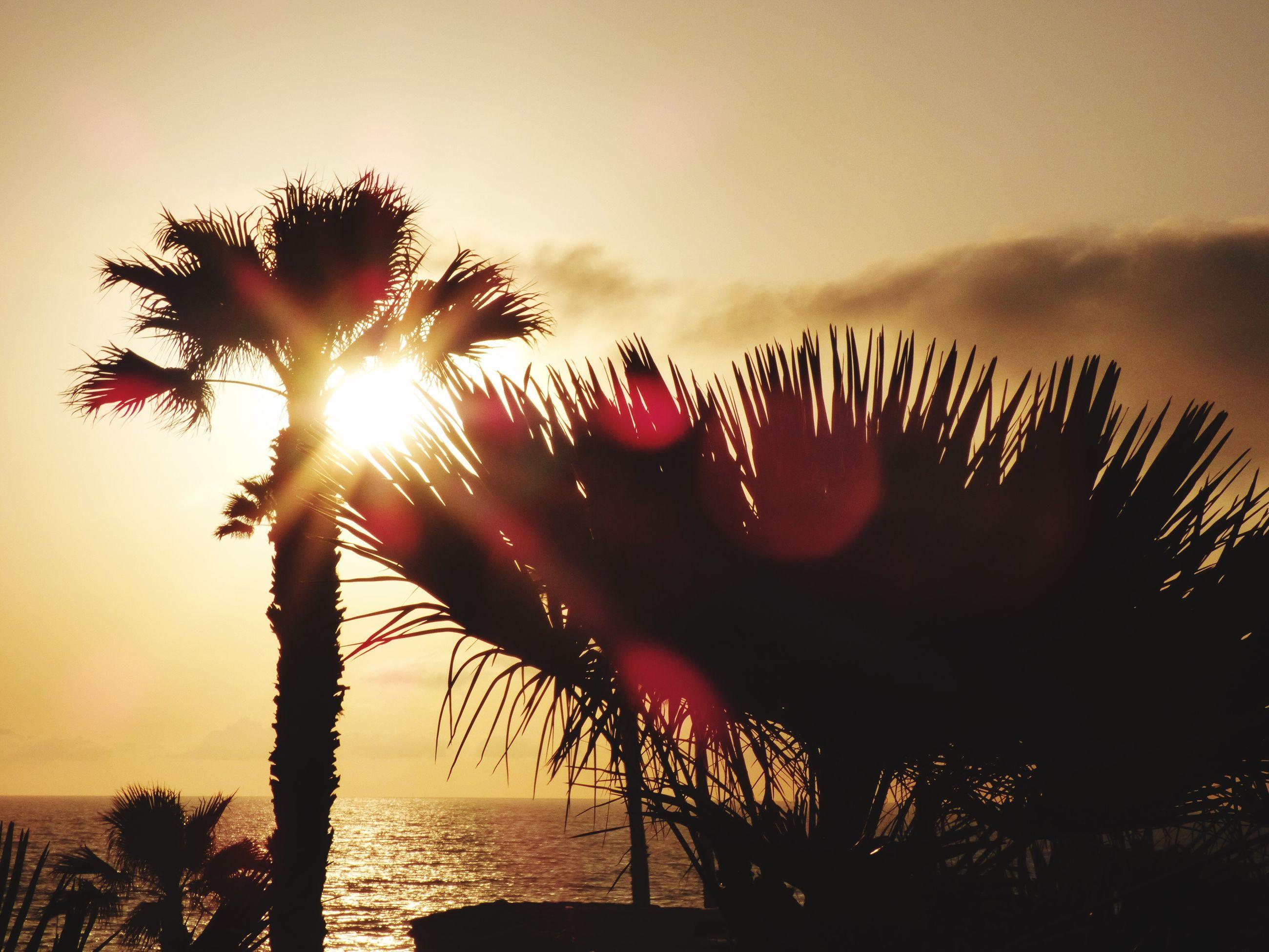 sunset, sun, silhouette, sunlight, nature, tree, scenics, outdoors, sky, sunbeam, beauty in nature, no people, day