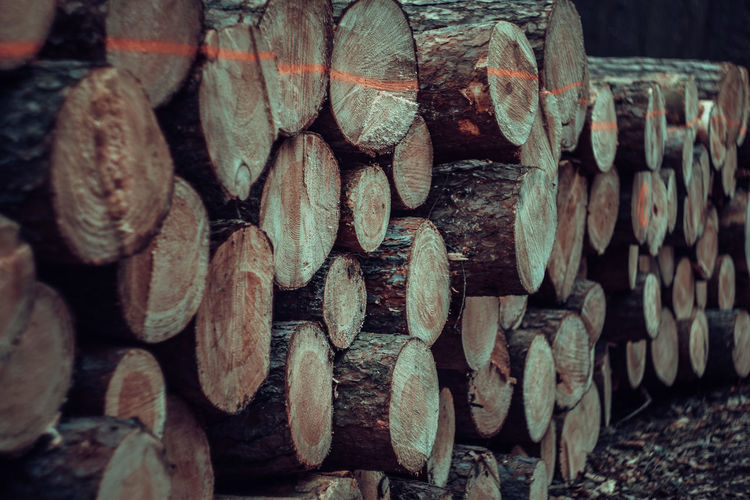 Exceptional Photographs Silhouette EueEm Nature Lover Tree Trunk Forestwalk Poland Woodpile Stack Wood - Material Log Full Frame Close-up Forestry Industry Bonfire Timber Firewood Knotted Wood Hardwood