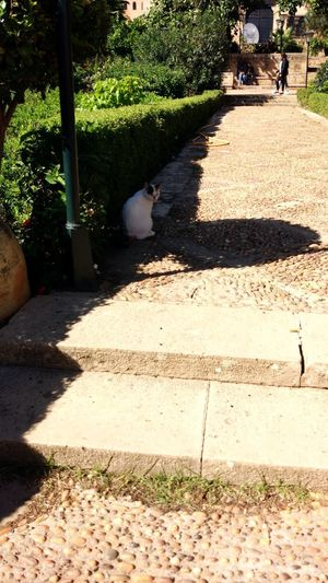 Shadow of a cat on footpath