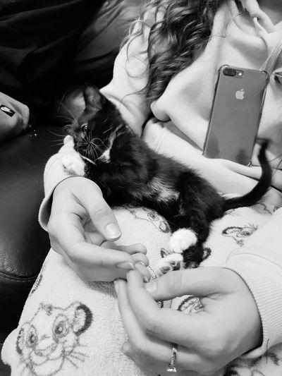Kittens Kittens