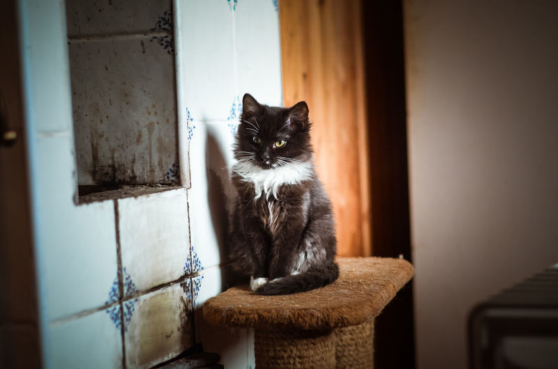 Pets Domestic One Animal Domestic Animals Mammal Cat Domestic Cat Nikon5100D Nikon 50mm 50mm 1.4 Homeless Animal Black Cat Russia Yellow Eyes Yellow Eyed Cat Homeless Cats Cat's Eyes Kitten Black And White Cat Stove No People Looking
