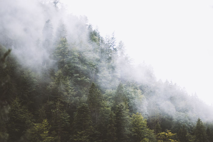 Lost In The Landscape Beauty In Nature Day Fog Forest Growth Hazy  Landscape Mist Nature No People Outdoors Scenics Sky Tranquil Scene Tranquility Tree