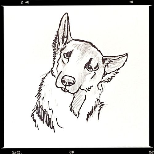 my sketch today Dog Sketch Drawing