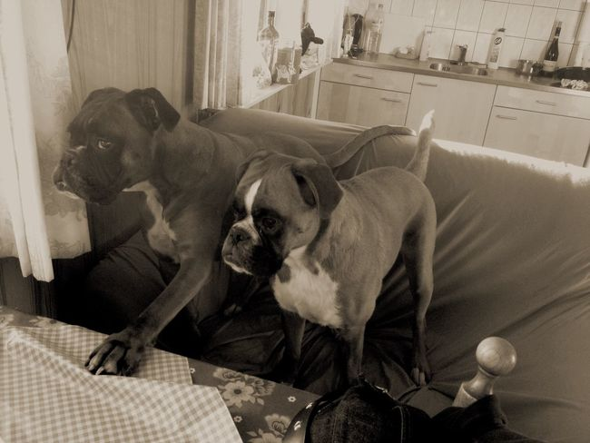 I love my boxers!