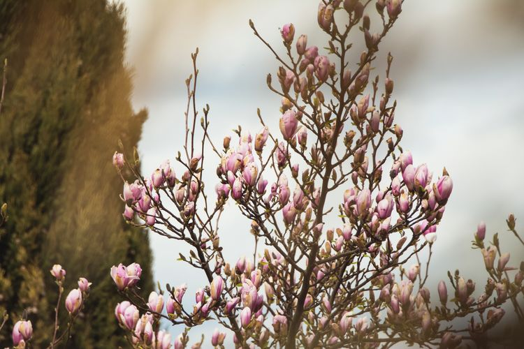 Happy Branches Bulbs Spring Flowers Trees Spring Nature On Your Doorstep Nature Naturelovers Nature Photography Nature_collection Atmosphere Tree Treescollection Tree_collection  Tree And Sky