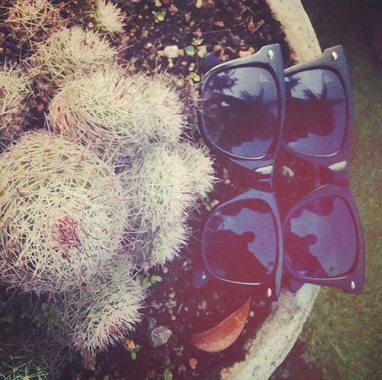 Cooler Nature :-) Shades Vicentchase Cactus