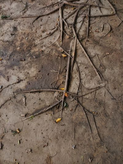 Nature Roots Of