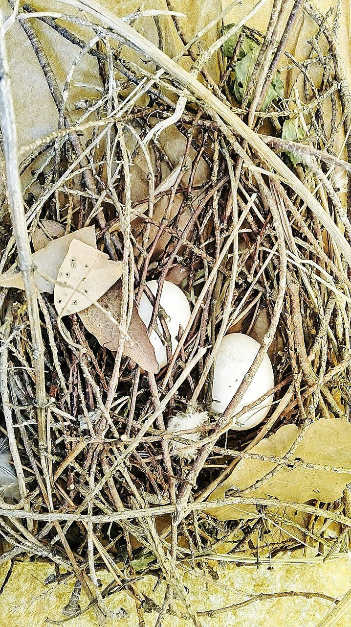 abandoned, no people, day, outdoors, bird nest, close-up