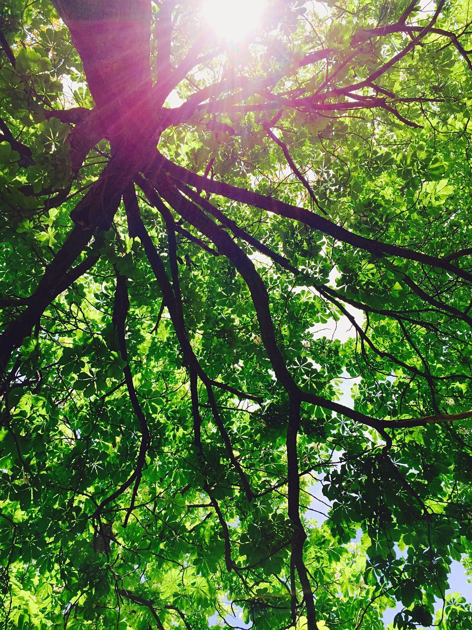 Low Angle View Of Tree Growing In Forest On Sunny Day
