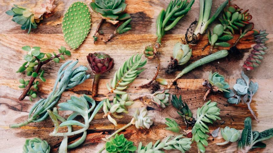 Plant Garden Garening Apartment Succulents Flat Lay Variation Green Color Vegetable Herb Food And Drink No People Healthy Eating Indoors  Day Close-up