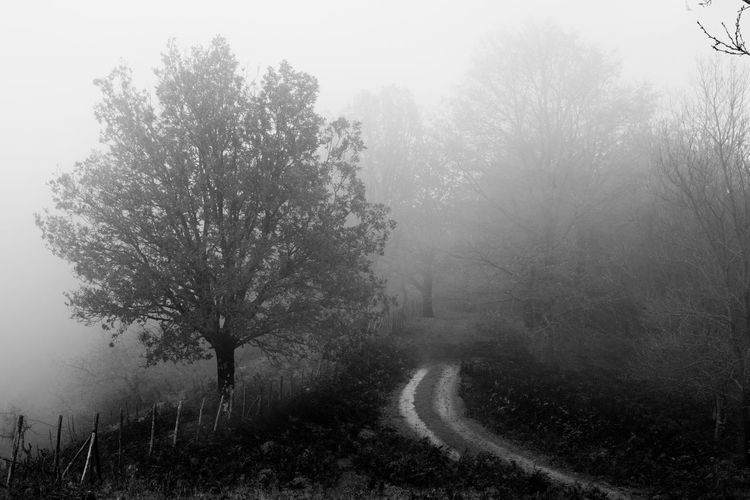 Trees by road against sky during foggy weather