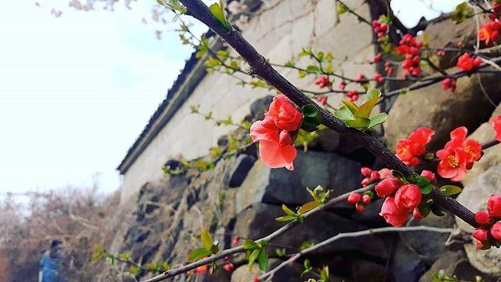 부산 Busan 바다 일상 데일리 Spring 감성 감성사진 사진 여행 일상공유 맞팔 Sotong 미러리스카메라 Follow Followme Photo Travel Daily Southkorea