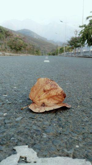 cuộc đời nhẹ nhàng như một chiếc lá ! First Eyeem Photo