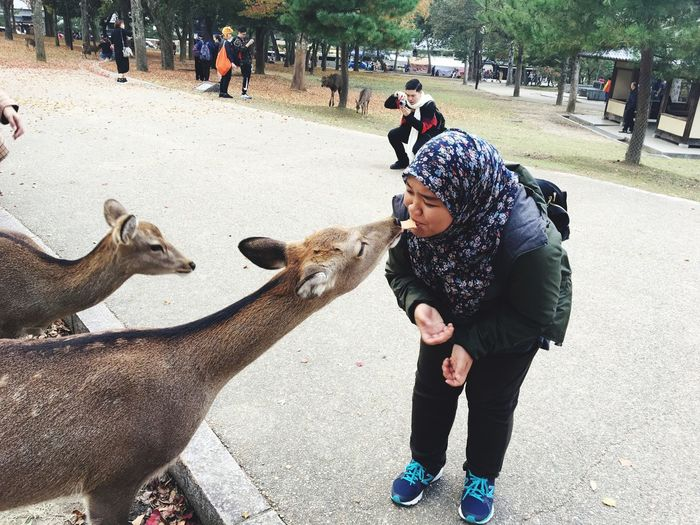 Love need courage. Deer Travelwriter Travelworld Travel Shafiqahanafi Nara,Japan Real People Leisure Activity One Animal Lifestyles Domestic Animals Day Large Group Of People Outdoors Women Adult People
