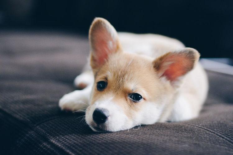 Close-up portrait of dog sitting on sofa