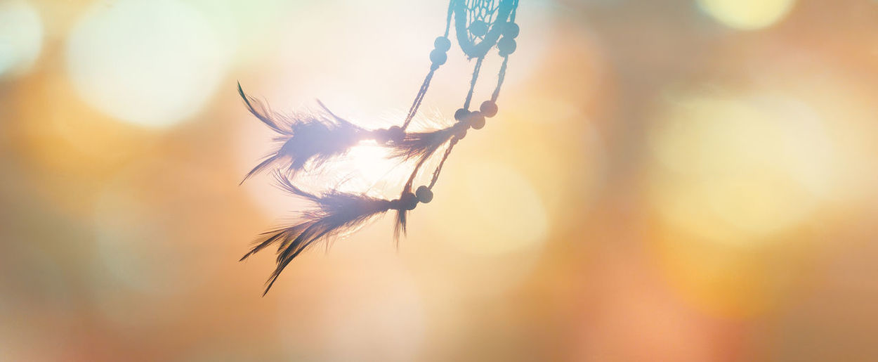 Dream catcher native american in the wind and blurred colorful bright light backgrounds, abstract hope and dream concepts Colorful Hopes And Dreams Hope Abstract Dreamcatcher Stalk Flowering Plant Softness Feather  Sky Lens Flare Sunlight Day Outdoors Fragility Vulnerability  Tranquility Growth Sunset No People Nature Selective Focus Focus On Foreground Beauty In Nature Close-up Feather  Lightweight