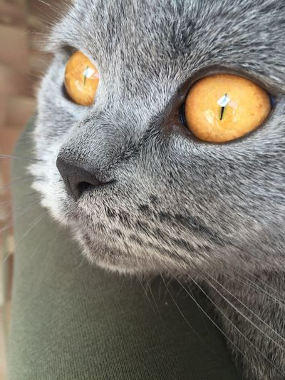Hunting for pigeons Cat Pets Animal Eye One Animal Animal Themes Close-up Domestic Cat Alertness Domestic Animals Feline Animal Head  Part Of Looking At Camera Whisker Mammal Animal Nose Extreme Close-up Curiosity Full Frame Whiskers First Eyeem Photo
