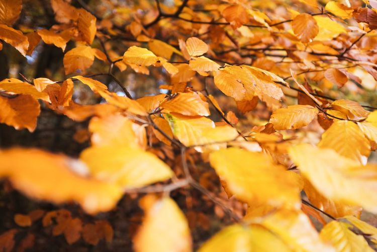 Leaf Plant Part Change Autumn Leaves Full Frame Close-up