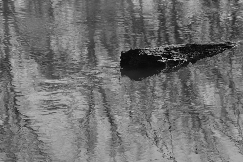 Animal Themes Bird Blackandwhite Contrast Day Domestic Animals Eye4photography  EyeEm Best Shots EyeEm Nature Lover Light Light And Shadow Mammal Nature No People One Animal Outdoors Peaceful Reflection Shadow Swimming Textured  Tranquility Water Waterfront BYOPaper! The Great Outdoors
