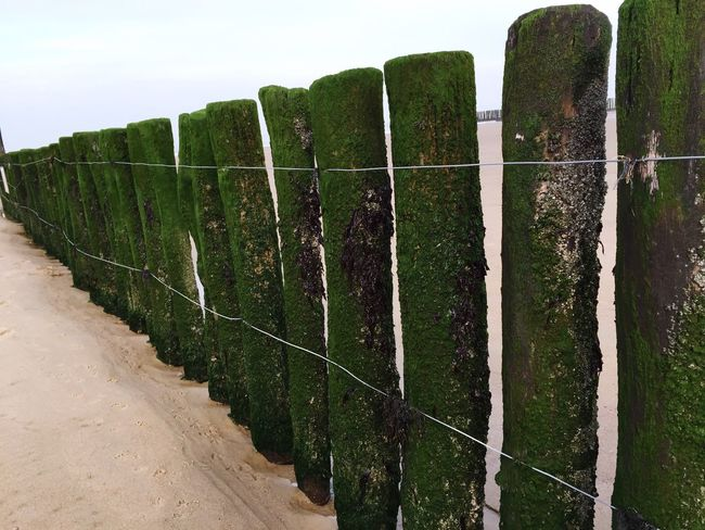 Fence Beach Seaweed Rotten Wood