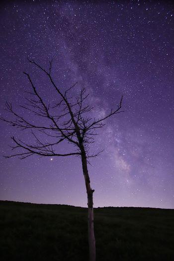 長野では今日が七夕なのです🌌 銀河鉄道の夜♪ 星いのはレンズ Astronomy Galaxy Tree Star - Space Globular Star Cluster Constellation Bare Tree Rural Scene Natural Parkland Tree Trunk