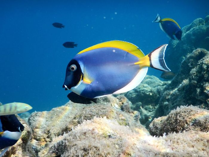 Fish swimming in sea, dori