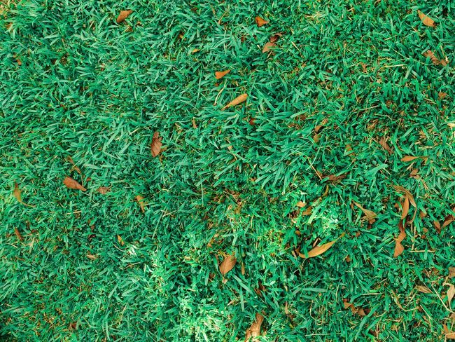 Turf Backgrounds Full Frame Leaf High Angle View Pattern Close-up Grass Green Color Plant Greenery Green Leaves Leaf Vein